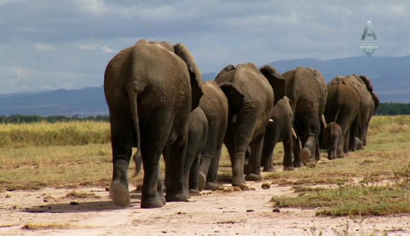 An Apology to Elephants (2013)